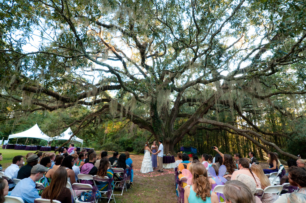 Wide angle view of the oak tree during the ceremony